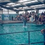 Dolphin performing tail walk tricks