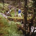 Ben Damph forest