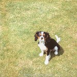Photo of a pet dog taken in July 1972