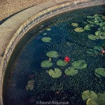Pictures of Oxford - Lily pond