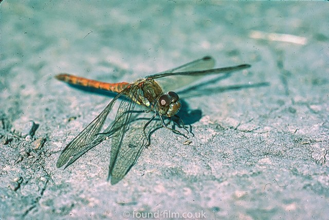 Macro photos on film - Dragonfly