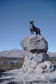 A Dog statue on Lake Takapo, New Zealand