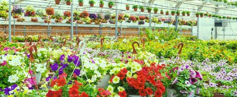 27+ Profitable Business Ideas for a Group of Friends Garden Center