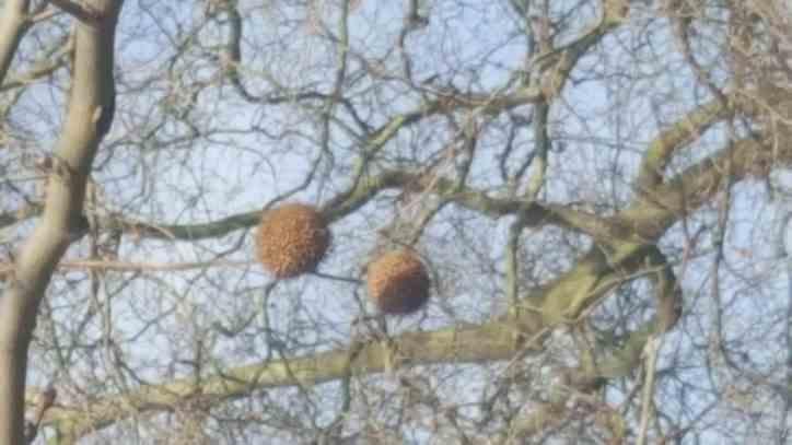 London Plan fruit in winter