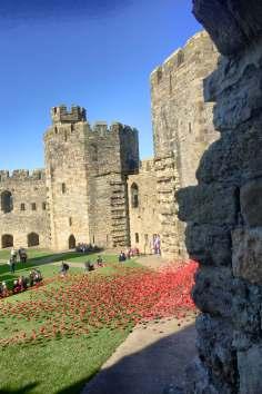caernarfon-castle-poppies-in-wales-5