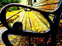 bench (© 2010 Tisha Clinkenbeard)