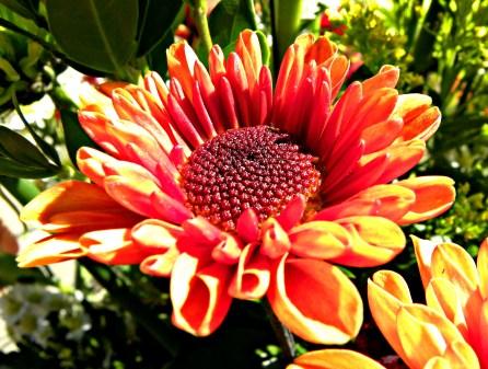 orange daisy?