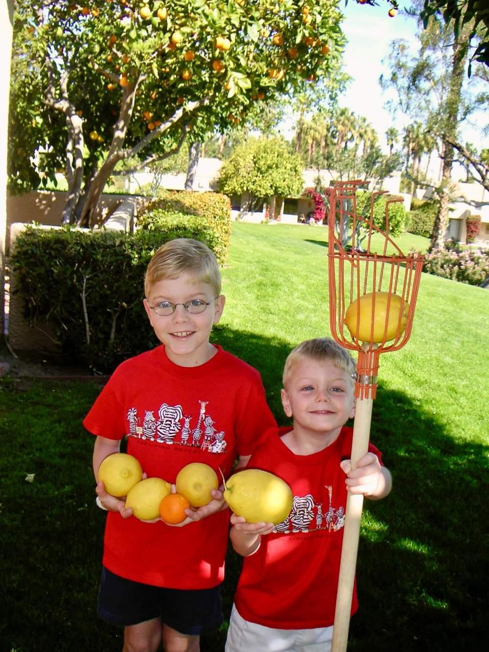 grapefruit picking 2007