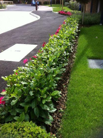 garden design ideas how to use shrubs for hedge on Small Garden Hedge Ideas id=86277