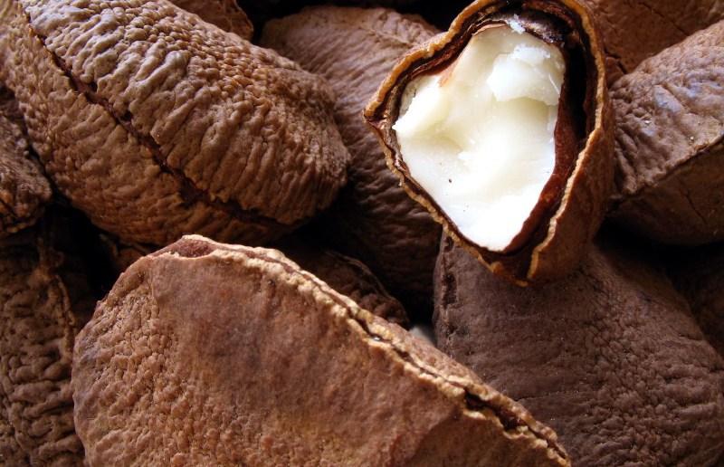 Бразильский орех и его полезные свойства