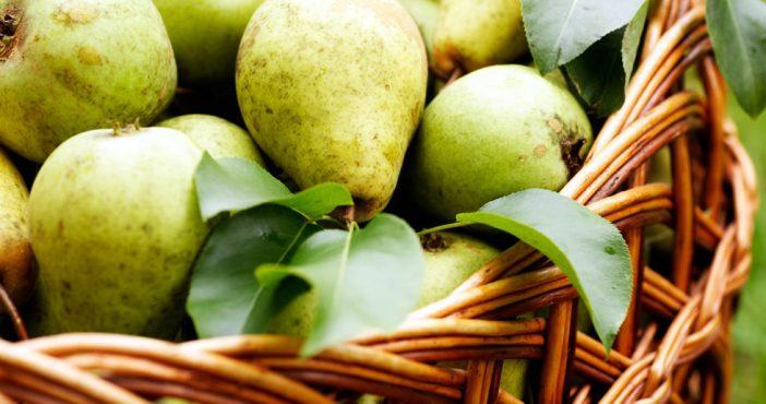 Полезные свойства груша для здоровья и красоты