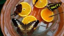 Экскурсии из Штутгарта: остров цветов Майнау