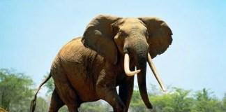La conversione dell'elefante lungo il percorso del desiderio