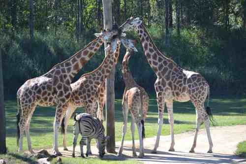 Australia Zoo with kids