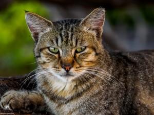 Waikoloa feral cats (13 of 22)