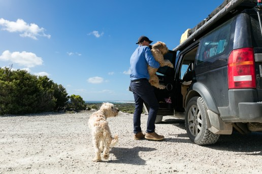 Bailey and Saffy being lifted into the car. We had the Landy converted so that they have a permanent bed in the back