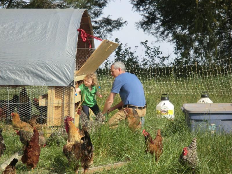 January Backyard Chicken SALE!