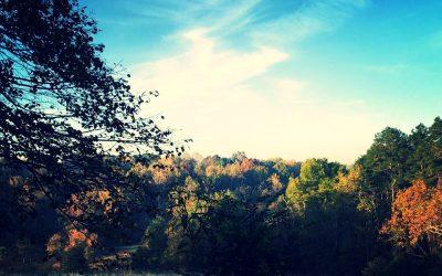 Fall Farm Field Day: Coming Soon!