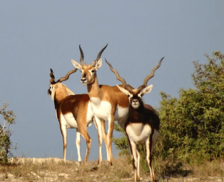 Black-Buck-L-and-L-Adventures