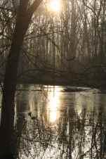 Water: Winter Morning