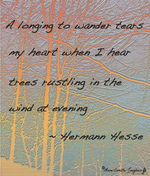 Hesse Quote, Winter Trees