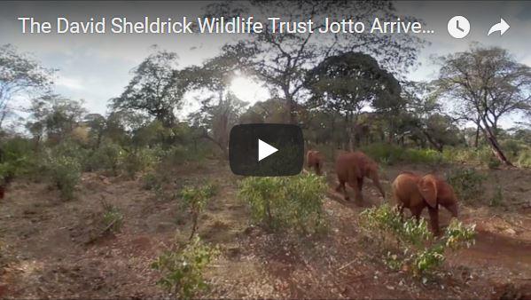 David Sheldrick Wildlife Trust Baby Elephants Arrive