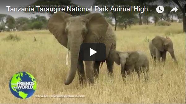 Tanzania Tarangire National Park Animal Highlights