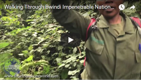 Walking Through Bwindi Impenetrable National Park