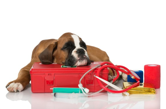 become a pet first aid instructor
