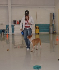 How to train loose leash walking - Salt Lake City - Dog Training