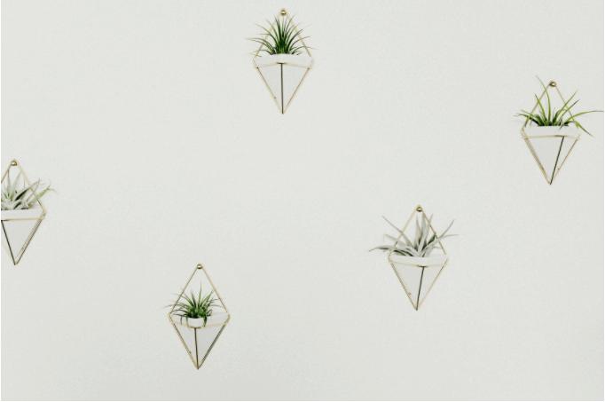 plantsWall