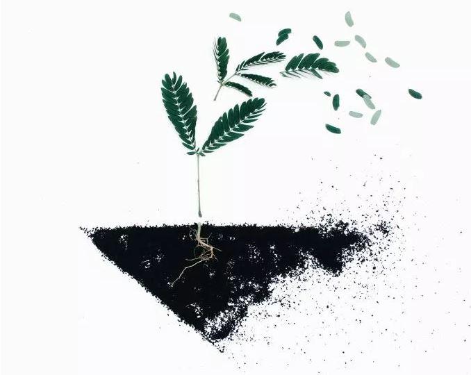 plantSoil.JPG