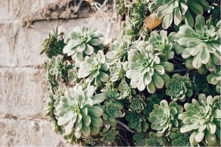 plantsWallWhite.JPG