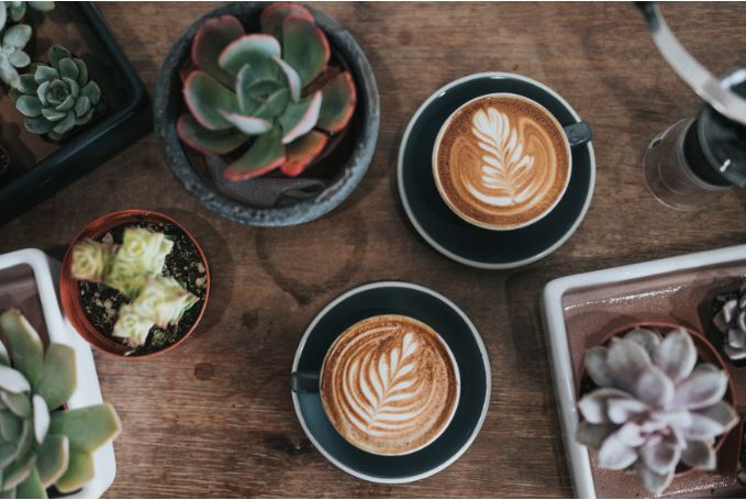 coffeePlants.JPG