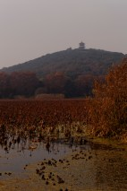 Perched atop Nandu hill, a pagoda watches over Turtle Head.