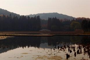 Yuantouzhu Island Horizon