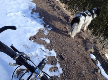 Front bike tire and dog