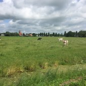 Kooien en kerk, Oosterwierum, Friesland