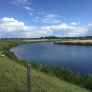 rivier en schapen Dalfsen, Overijssel