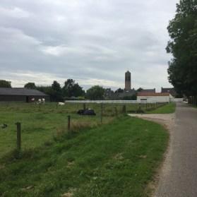 koeien, Vierlingsbeek, North Brabant