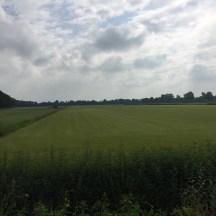 perfect gemaaid gras veld