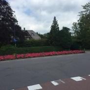 rose bloemen voor gewas langs weg