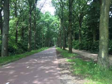 lange fietspad door bomen