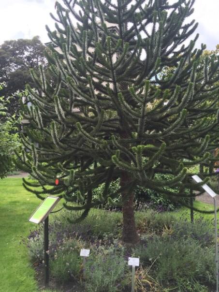apenboom