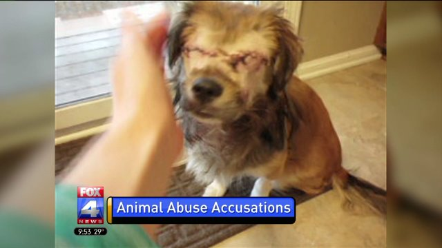 Dog Owner Spends The Night In Jail Following Animal Abuse Citation