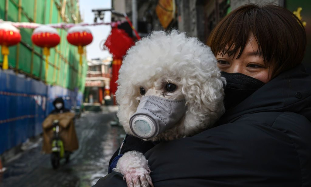 Dog with face mask in China
