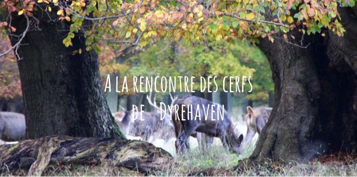 A la rencontre des cerfs de Dyrehaven