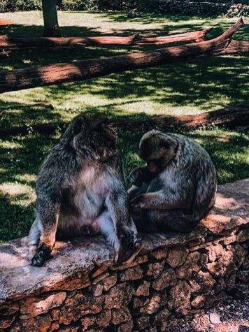 visiter la forêt des singes rocamadour
