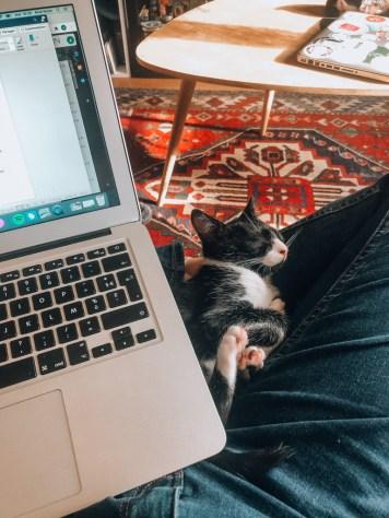 Télétravailler avec un chaton