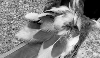 bird-feather